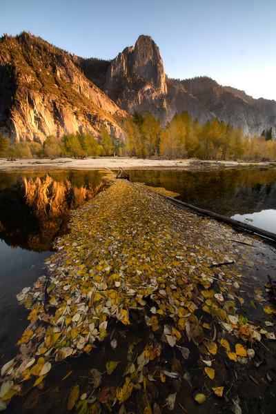 Fall Foliage Along Yosemite River Bend And Sentinel Rock - Lower Yosemite Valley, Yosemite National Park, California