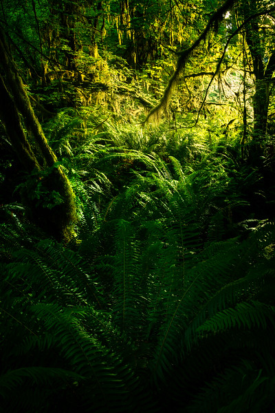 An Opening In The Trees - Hoh Rain Forest, Olympic National Park, WA