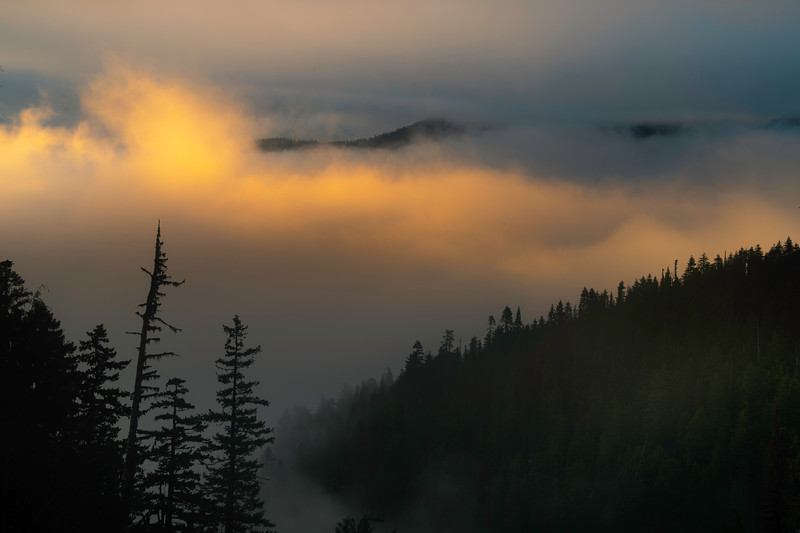 High And Above It All - Hurricane Ridge, Olympic National Park, WA