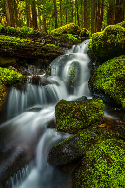 One Cascade At A Time Sol Duc Falls, Olympic National Park, WA