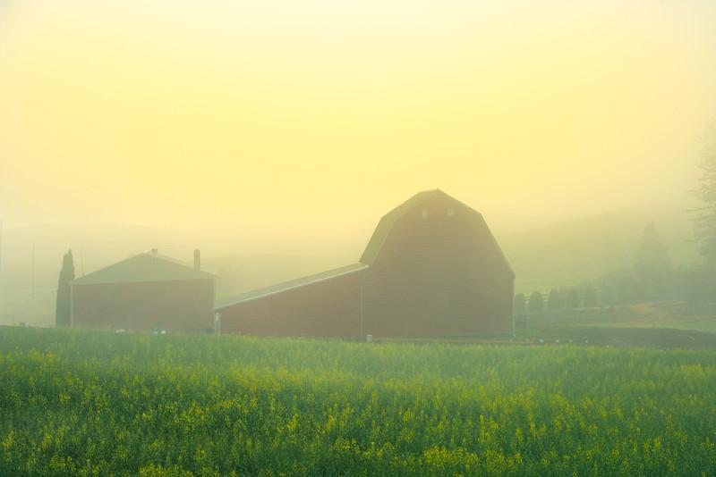 Sunrise Through The Fog - Danielson Road, Genesee, Palouse, Idaho
