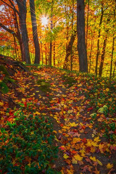 Fall Foliage Dresses The Hiking Trails