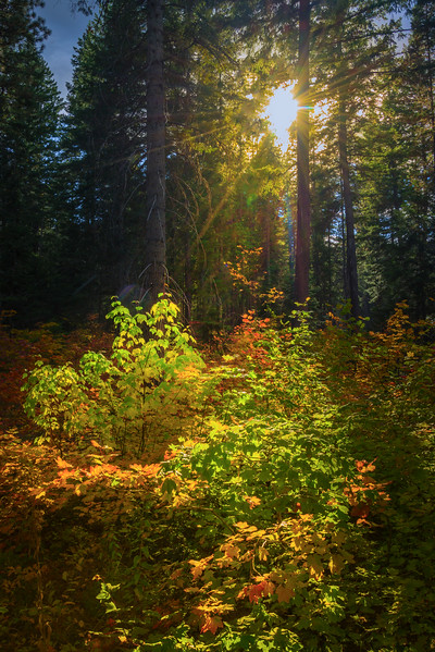 Sun Coming Through Fall Forest - Lake Wenatchee State Park, Leavenworth, WA