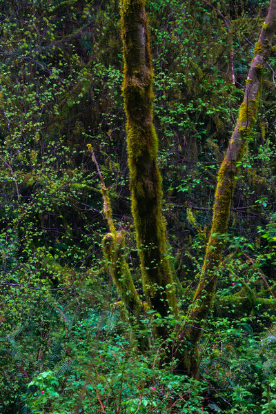 Falling Spring Foliage - Russian Gulch State Park, Mendocino, California