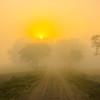 The Road Into The Morning Light Kaziranga National Park, Assam, North-Eastern India