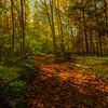 An Autumn Walk Through Robert Treman Park