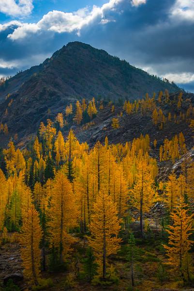 Along The Ridgeline With Larches - Mt Stuart, Lake Ingalls, Alpine Lakes Wilderness, WA