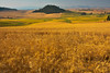 Palouse Wheat Overlook In Early Morning