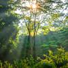 Sun Rays Filling The Forest Kaziranga National Park, Assam, North-Eastern India