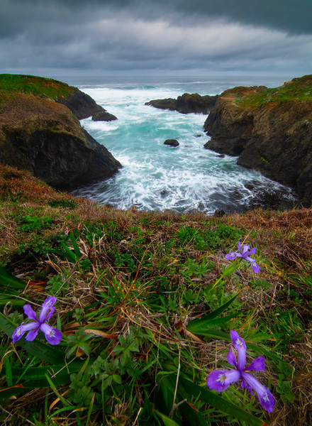 Just Hanging Cliffside On The Headlands - Mendocino Headlands, California