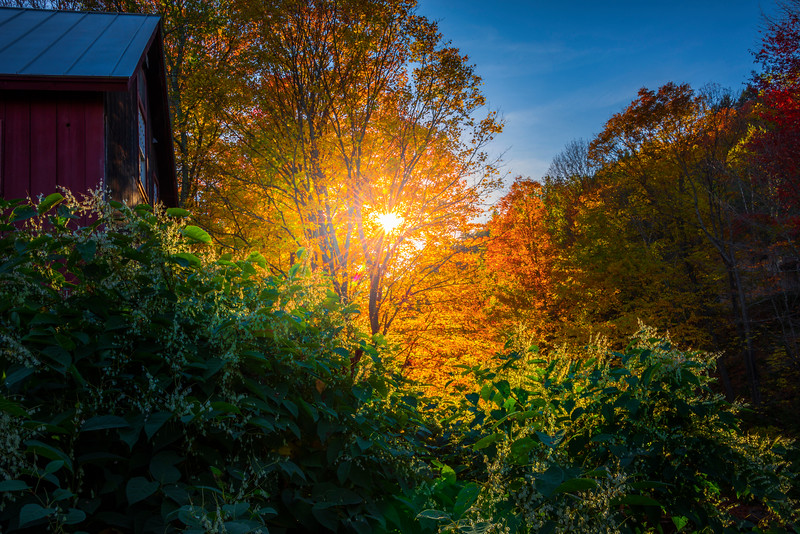 Sunburst Through Trees At End Of Day - Vermont