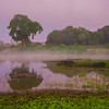 Early Morning Mist Rises During Twilight -  Kaziranga National Park, Assam, North-Eastern India