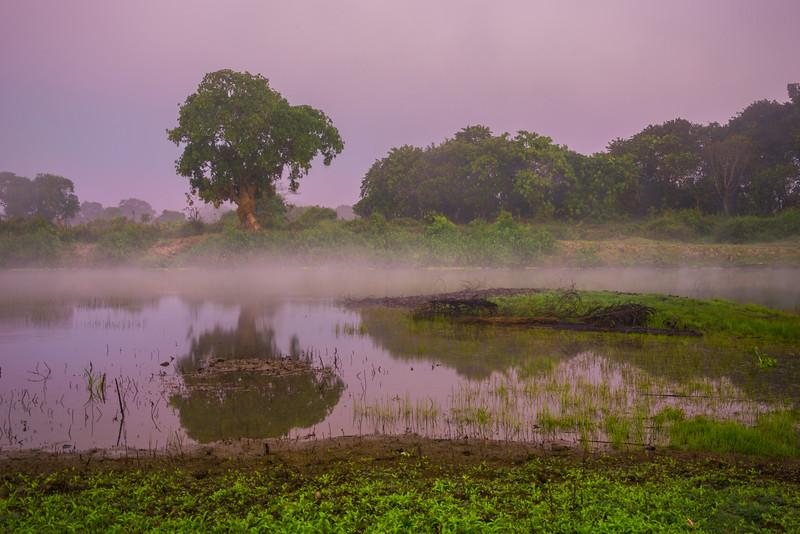 Early Morning Mist Rises During Twilight -  Kaziranga National Park, Assam, North-Eastern India