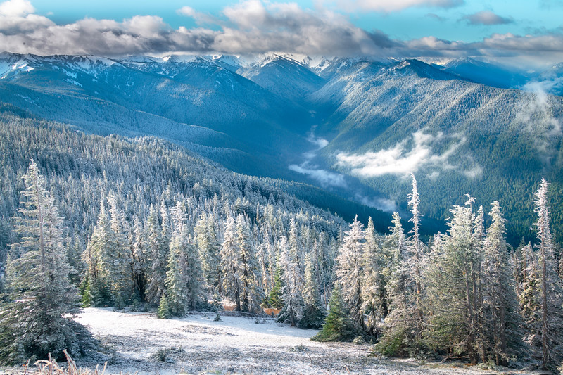 Winter Dusting In The Valley - Hurricane Ridge, Olympic National Park, WA