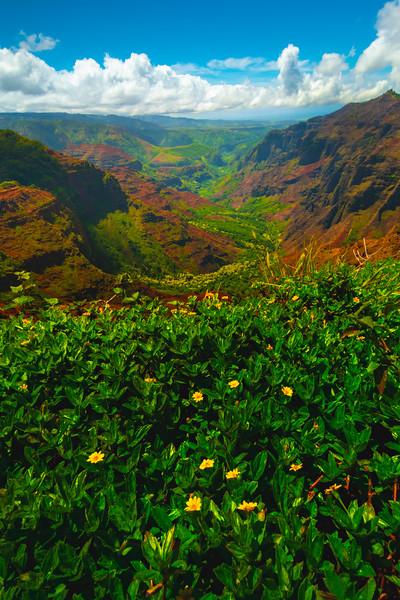 Flowers Cliffside Over Waimea - Waimea Canyon, Kauai, Hawaii