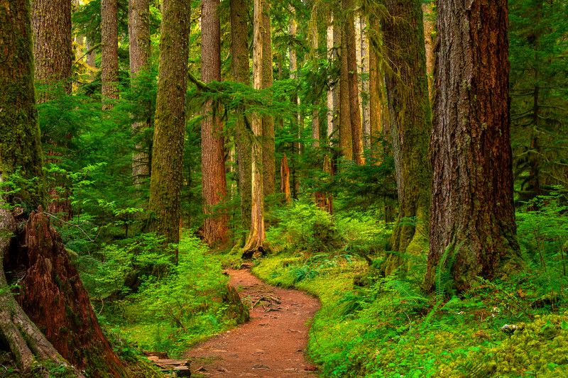 Entry Into The Sol Duc Forest Sol Duc Falls, Olympic National Park, WA