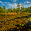 Lily Pond Withing Boundaries Of Killarney Park - Algonquin Provincial Park, Nipissing, South Part, Ontario, Canada