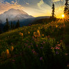 Sunburst Rays From Silver - Silver Forest Trail, Mt Rainier NP, WA