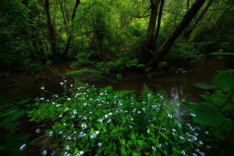Spring Alive In The Russian Gulch State Park - Russian Gulch State Park, Mendocino, California