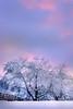 Pink Hues Rising From The Horizon - Olympia, WA
