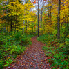 Autumn Trails In The Chittenden Reservoir - Vermont