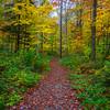 Autumn Trails In The Chittenden Reservoir - Vermont