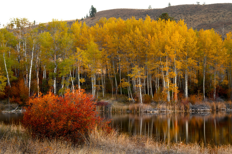 ramed In Autumn Silence - Methow Valley, Washington State