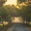 Entering Kaziranga National Park Early Morning Kaziranga National Park, Assam, North-Eastern India