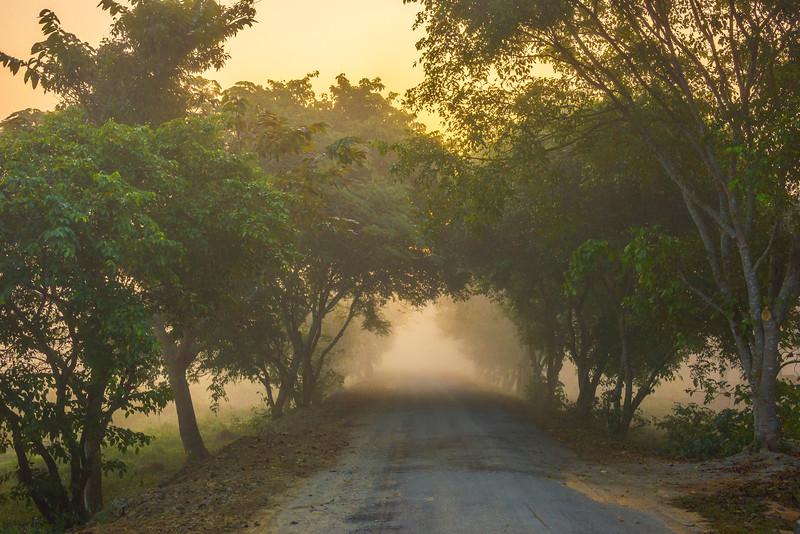 Entering Kaziranga National Park Early Morning Kaziranga National Park, Assam, North-Eastern India