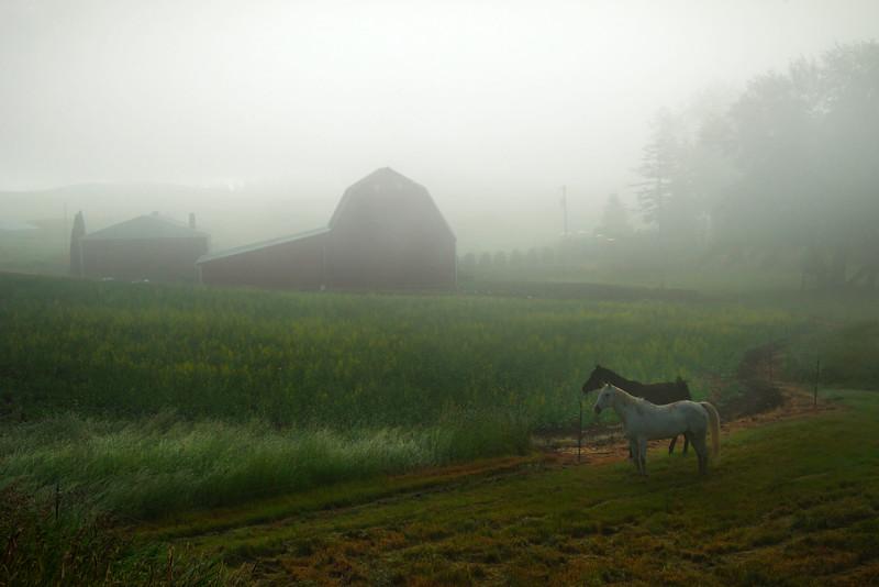 Horses In The Mist - Danielson Road, Genesee, Palouse, Idaho