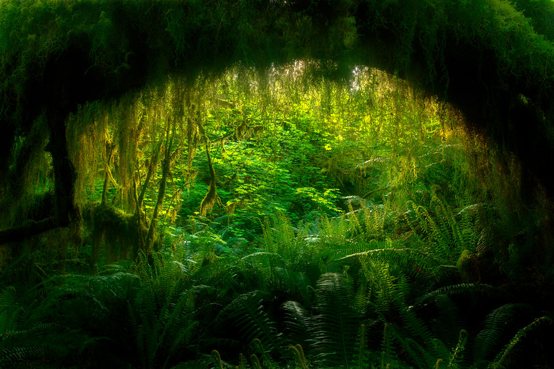 Gateway To The Green Forest - Hoh Rainforest, Olympic National Park, WA