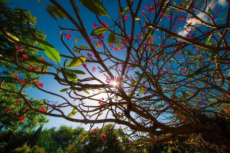 Looking Up At Tropical Paradise