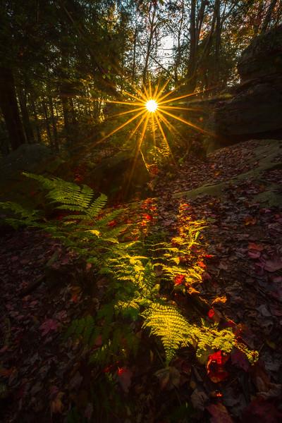 Last Light Showcase The Autumn Foliage-Ricketts Glen State Park,  Benton, Pennsylvania