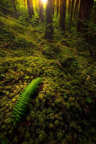 Just The Quiet Sound Of A Fern Sol Duc Falls, Olympic National Park, WA
