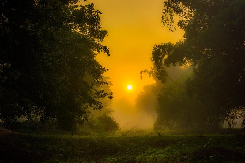 Down The Opening At Sunrise Kaziranga National Park, Assam, North-Eastern India