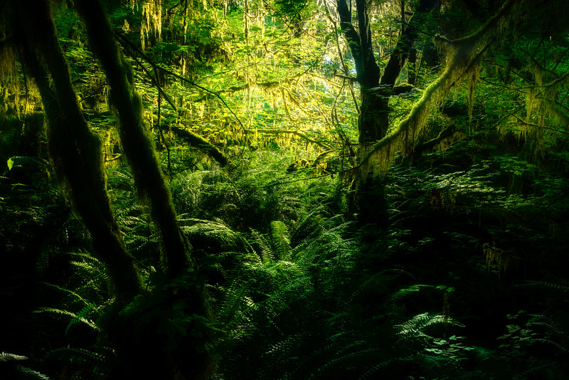 Lost In All The Moss - Hoh Rain Forest, Olympic National Park, WA