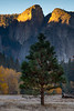 Cathedral Peaks At Sunrise From Near Swinging Bridge - Lower Yosemite Valley, Yosemite National Park, California