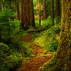 A Pathway Of Spring Life Sol Duc Falls, Olympic National Park, WA