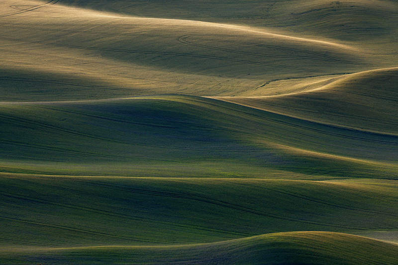 Glowing Signs Of Spring On The Palouse - The Palouse Region, Washington