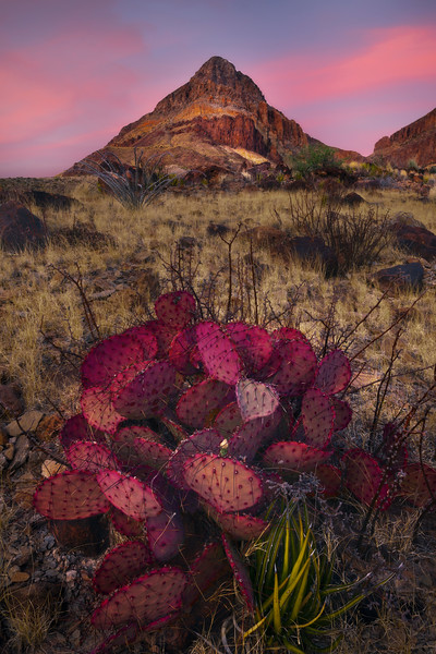 Pink Pastels Looming For Sunset - Big Bend National Park, Texas