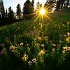 A Circle Of Light In The Meadow - Dead Horse Creek Trail, Mt Rainier NP, WA