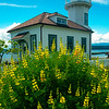 Port Townsend Lighthouse and Yellow Lupine -  Port Townsend, WA