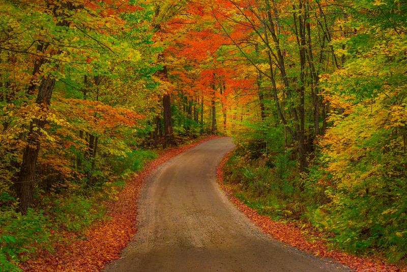 Driving The Backroads Of Color - Algonquin Provincial Park, Nipissing, South Part, Ontario, Canada