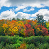 Layers Of Foliage And Color