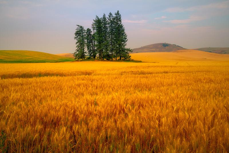 The Gleen Of Morning Light - Palouse, Eastern Washington