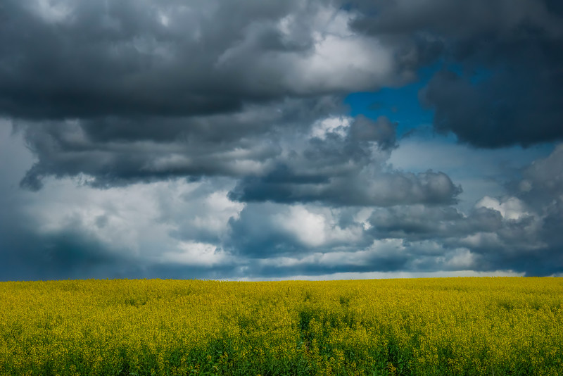 Storm Clouds Hovering The Canola In The Wallowas Wallowa County, Oregon