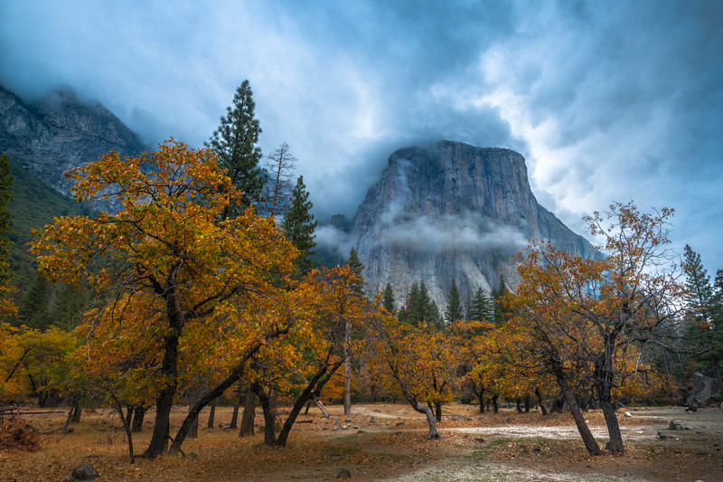 Gardens Of Yellow And El Captain - Lower Yosemite Valley, Yosemite National Park, CA