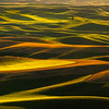 Streaks Of Gold And Green From Steptoe - Steptoe Butte State Park, Palouse, WA