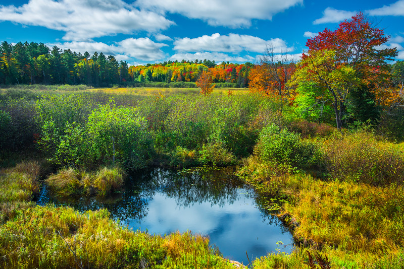 Pool Of Color Reflections Across Field