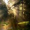 Sunburst Rays Shine Through Sol Duc Forest - Sol Duc River, Olympic National Park, WA